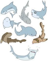 cute shark drawing tumblr. Fine Shark Throughout Cute Shark Drawing Tumblr H