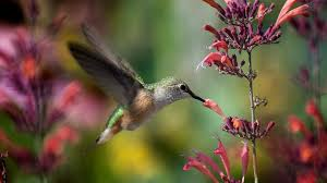 Hummingbird Species You Can Find Only In And Around Costa Rica