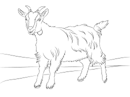 Coloring Pages of Goat | Animal Coloring Pages | Pinterest | Goats ...