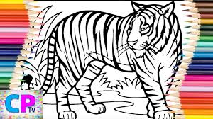 Posted in animals coloring pages. Tiger Coloring Pages Wild Tiger Is Walking And Ready For Action Coloring Pages Tv Youtube