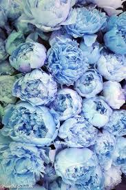 blue flowers background tumblr. Interesting Background Blue Flowers Intended Flowers Background Tumblr B