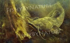 flathead catfish wallpaper.  Catfish Flathead Catfish Wallpaper Fish Fishing Art Of Flathead Catfish 1000x616 On