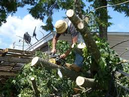 tree surgery services cutting prices4
