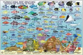 Florida Keys Map Fish Id Card