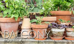 apartment gardening. Interesting Gardening Apartment Balcony With Potted Pots Inside Gardening V
