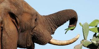 Image result for what do elephants eat