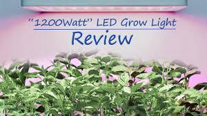 Amazon Led Grow Light Reviews