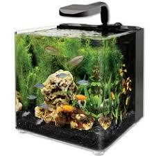 petco betta fish tanks. Fine Tanks Petco Red U0026 Green Fiesta Atlantis Plastic Aquarium Plant  My Pet  Dreamboard Pinterest Fish Food Aquariums And Fish And Betta Tanks N