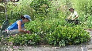 gardener helper