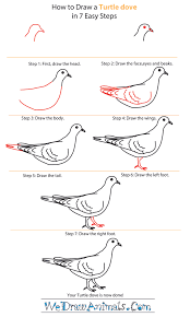 Small Picture How to Draw a Turtle Dove