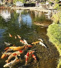 backyard koi pond better homes gardens