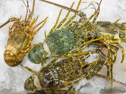 Fresh Frozen Lobster For Sale On Ice At ...