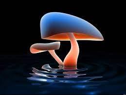 3d Mushroom Wallpaper Free HD ...