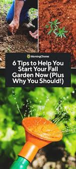 if you are considering growing a fall and winter garden this year here s everything you need to know