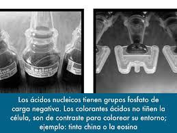 Sustancias De Origen Qu Mico O Biol Gico Generalmente
