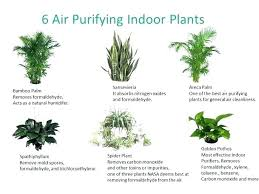 common household plants types of indoor plants good indoor plants common house plants in the types common household plants