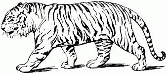 Small Picture Coloring Pages Of A Tiger FunyColoring
