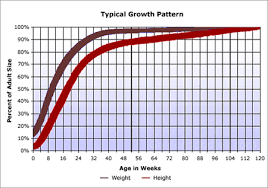 Labradoodle Size Graph Puppy Growth Chart Chiweenie