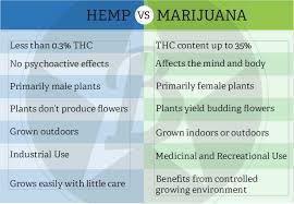 Hemp Uses Chart Hemp Vs Marijuana