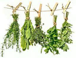 Check spelling or type a new query. Resultat De Recherche D Images Pour Thym Dessin Krauter Pflanzen Baumschule Pflanzen