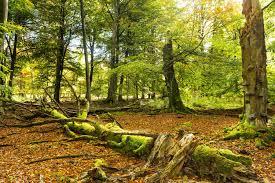 National Park And Nature Parks Hunsrück Touristik