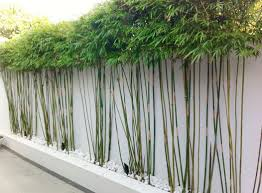 Image result for bamboo privacy fence
