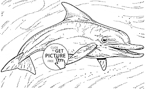 Small Picture Dolphin Animal Coloring Pages Cute Dolphin Page For Kids