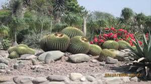 Small Picture Garden Ideas Cactus Rock Garden Ideas YouTube