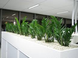 Image Diy Zanzibar Gem In Built In Planter Box Sydney Indoor Plant Hire Planter Boxes For Hire Sydney Buildings Hotels Offices