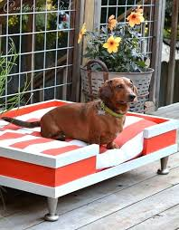 Inspirational Outdoor Furniture For Dogs Or Outdoor Dog Furniture N Outdoor  Pet Furniture Outdoor Dog Furniture 64 Outdoor Dog Furniture Australia