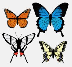 Butterfly Patterns Cool How To Draw Animals Butterflies Their Anatomy And Wing Patterns