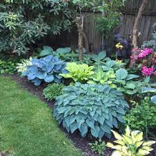 Small Picture Black Gold Top 10 Shade Garden Plants for the Pacific Northwest