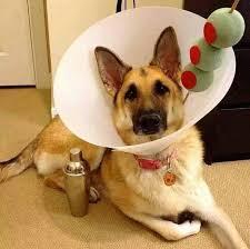 funny pet cones creative elizabethan collars 8