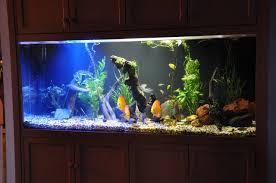 fish tank lighting ideas. Fish Tank Lighting Ideas N
