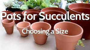Succulent Size Chart Pots For Succulents Choosing A Size