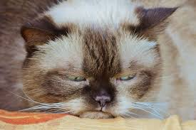 cat vomiting causes and clean up tips