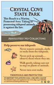 44 Veritable Tide Chart Shelter Cove Ca