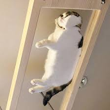 Funny cat pictures Twitter Sad And Useless Humor Cats On Glass Tables