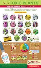 toxic plants infographic pet health