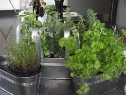 indoor kitchen garden. Herbs Growing In Metal Containers Kitchen Indoor Garden