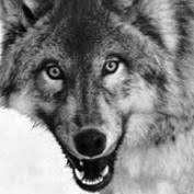 Byron Wolf on HubPages
