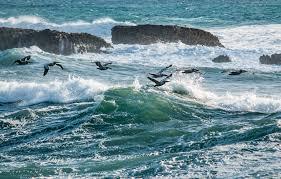 Black And White Birds On Sea Waves Free Image Peakpx