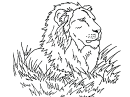 coloring pages of a lion coloring pages lions coloring page lion free lion king coloring free coloring pages of a lion