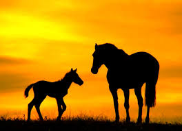 beautiful baby horses wallpaper. Delighful Horses View Original Size With Beautiful Baby Horses Wallpaper B