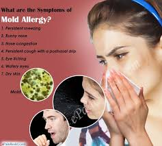 What is Mold Allergy Causes Symptoms Treatment