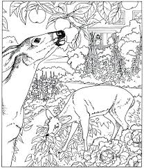 free coloring pages nature scenes printable ans nature coloring