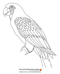 Parrot coloring pages - Hellokids.com