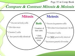 Venn Diagram Comparing Meiosis And Mitosis Comparing And Contrasting Mitosis And Meiosis Venn Diagram