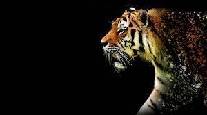 Tiger Abstract 4k tiger wallpapers, hd ...