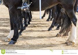 De Benen En De Hoeven Van Het Paard Stock Afbeelding Afbeelding